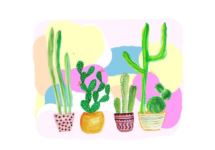 stampa cactus colorati